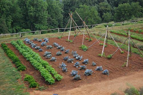 Amenajeaza-ti o gradina proprie, pentru a avea mereu la dispozitie legume proapete
