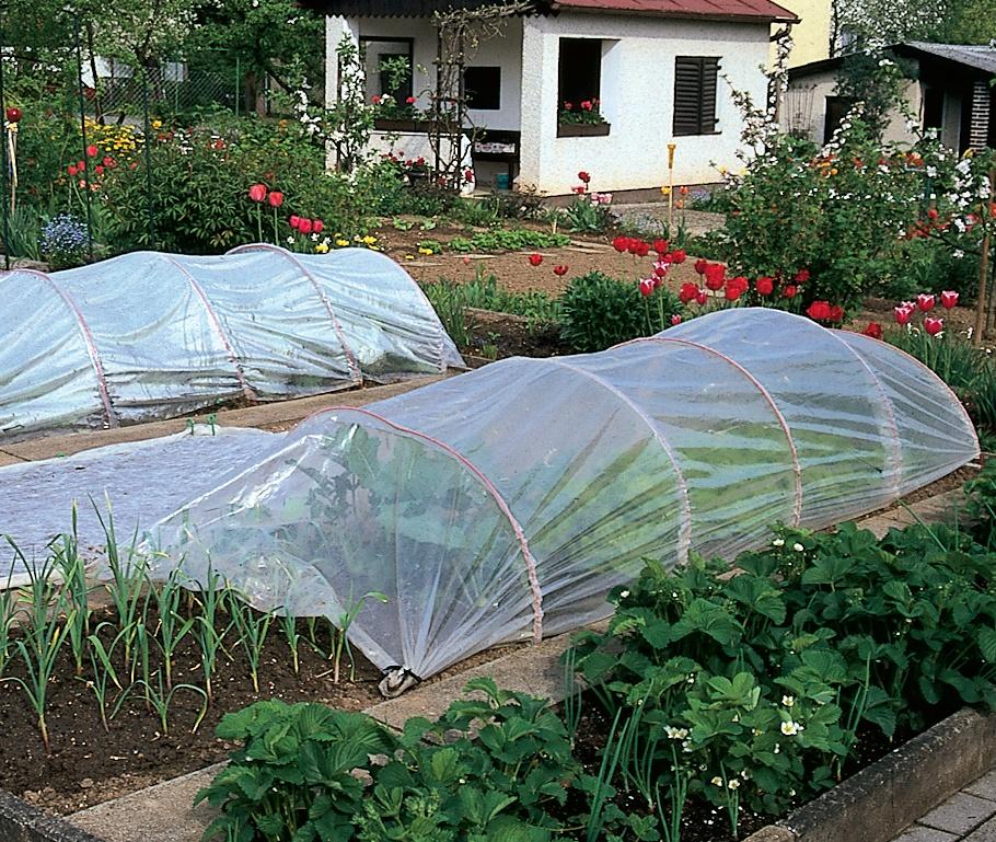 cultura legumelor luna aprilie