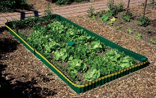 recoltare legume luna iulie