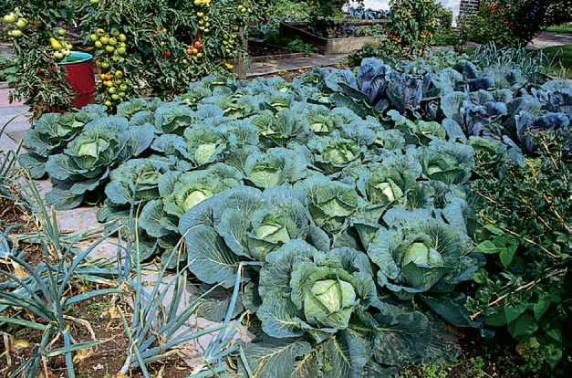 recoltare legume septembrie