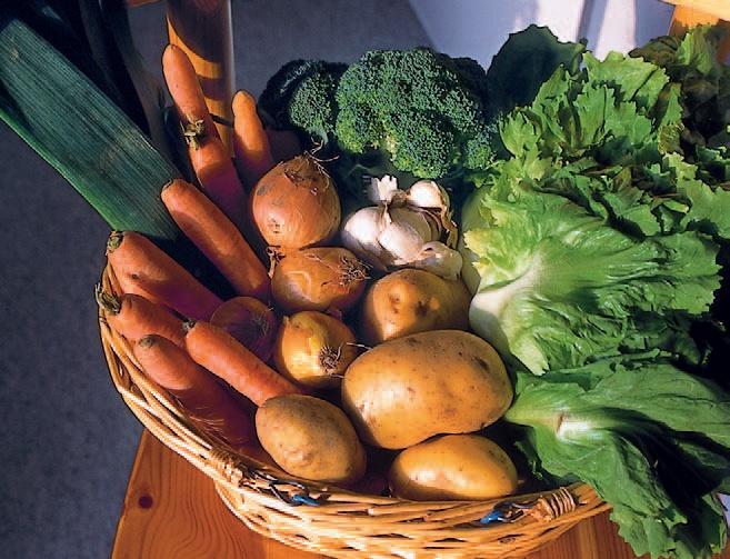 recoltare legume noembrie