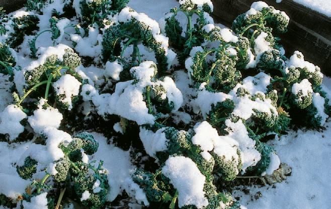 recoltare legume decembrie