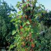 Lucrari in gradina de legume: lunile iulie - decembrie