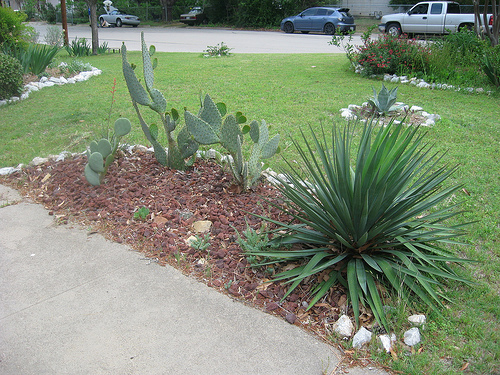 Decor Xeriscape