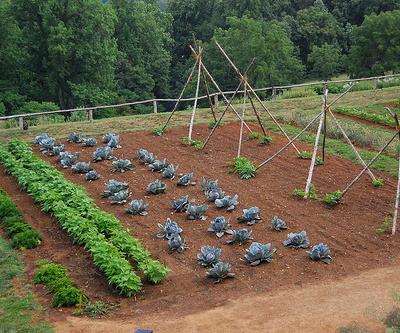 gradina cu legume