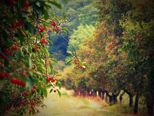 Vara-timpul recoltelor