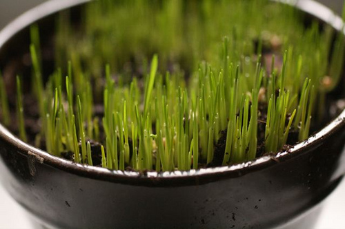 Plantarea semintelor