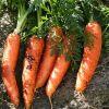 10 legume usor de crescut