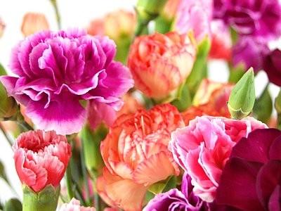 Cele mai romantice flori