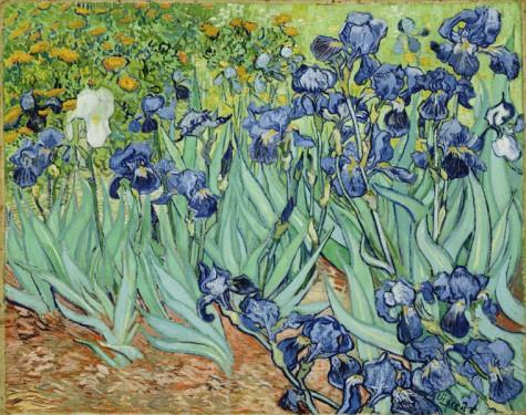 Iris-vincent van gogh