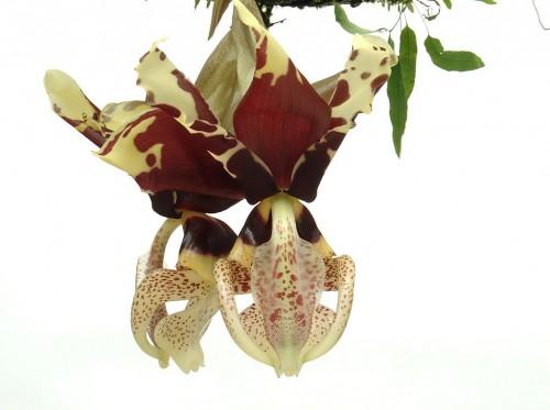 Cele mai frumoase orhidee